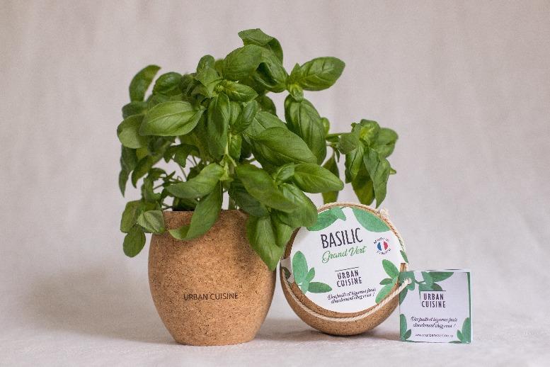 cultiver son basilic bio en pot