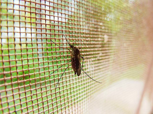 Utilisation de la moustiquaire